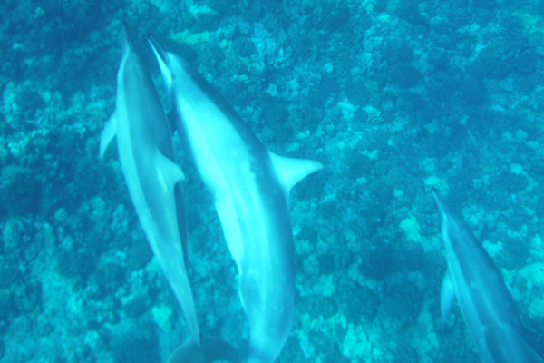 dolphins-retreat-hawaii