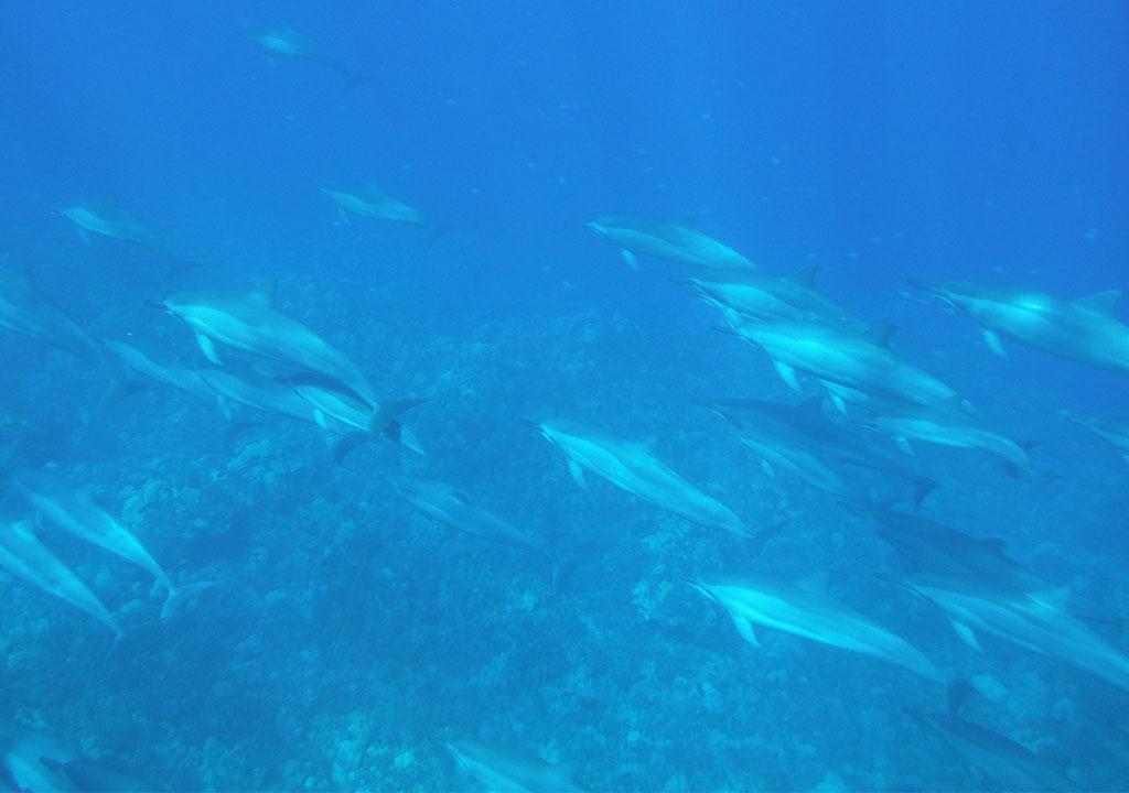 Stik z delfini mi je odprl nove dimenzije zavedanja in možnosti življenja
