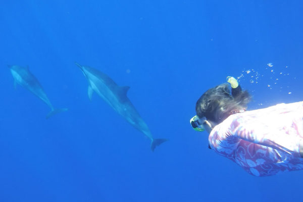 dolphis-retreat-hawaii-intuition
